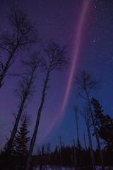 """Steve"" in the night sky (TofteTom) Tags: steve nightscapes nightsky auroraborealis northernlights minnesota sawbilltrail northwoods aurora"