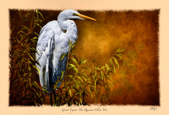 GE in a Russian Olive Tree (Johnrw1491) Tags: great egret giant bird birds avian fine art photography russian olive tree nature wildlife animals