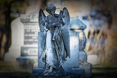 Follow me (moerden68) Tags: sonya7ii ilce7m2 nikkor 400mm f35 graveyard tombstone headstone newengland ais ed if nikon angel statue legacylens cemetery stbernardsparishcemetery concordma manualfocus