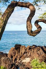 Ironwood Frame (Zeta_Ori) Tags: maui hawaii wailea grandwaileahotel grandwailea grandwailearesort