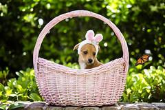 Happy Easter! (55randomclicks) Tags: easterbunny