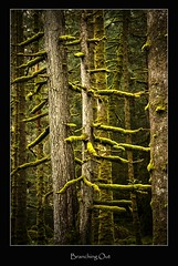 Branching out (tiggerpics2010) Tags: scotland nature westhighlands woodland moss mossy trees growth life green river