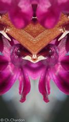 (christine chardon) Tags: fleurs flowers flores fiori innommés creatureart creaturedesign creation creature nature plante botanic photoart masque personnage fantastique mysterious printemps spring jrose