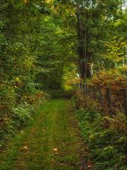 Green (Pilleluringen) Tags: nature landscape greeb leaves fall värmland persberg högbergsfältet wood trail path serene fence trees sweden outdoor