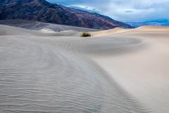 Rippled (Kirk Lougheed) Tags: california deathvalley deathvalleynationalpark mesquitedunes mesquiteflat tucki tuckimountain usa unitedstates dune landscape nationalpark outdoor sand sanddune