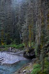 Johnston Creek Landscape (pokoroto) Tags: johnston creek landscape バンフ banff アルバータ州 alberta canada カナダ johnstoncanyon 8月 八月 葉月 hachigatsu hazuki leafmonth 2016 平成28年 summer august