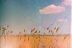 a berekben (szmenazsófi) Tags: asahipentaxsv pentaxsv asahipentax film analog analogue 35mm agfa analogslr analogueslr slr agfavistaplus berek kisbalaton hungary magyar magyarország táj damage filmdamage psychedelic reed reeds wetland sky