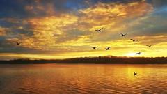Golden Morning (Melanie Bradley) Tags: narrowriver rhodeisland reflections coastline seascape newengland landscape nature sunrise