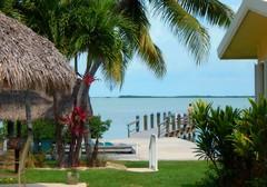 Feeling Tropical (guarnc) Tags: keys florida bay coconut