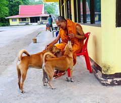 ,, Rocky, Mama, Mr Kind Monk ,, (Jon in Thailand) Tags: yellow red blue orange plasticchair bucket jungle street streetphotography streetphotographyjunglestyle monk kindmonk people asia nikon d300 nikkor 175528 dog dogs k9 k9s rocky mama green brown reflection redtileroof eyes ears tails nose kindman motherson littledoglaughedstories