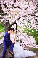 櫻緣 (Clonedbird 克隆鳥 & Iris 艾莉絲) Tags: 關西 寺廟 古蹟 奈良 奈良公園 東大寺 京都 日本 櫻花 櫻花季 japan nara sakura kyoto cherry blossom flower spring 2016 nikon d810