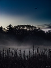 (Mr. Tailwagger) Tags: leica m240 summilux 75mm dawn tailwagger pond fog sunrise moon concord mass mist reeds trees crescent
