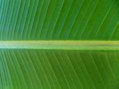 Macro e Texturas (Yanne Roberto) Tags: macro textura verde green animal natureza roxo purple folha linhas line pink rosa vermelho red fruit cogumelo pedrapreciosa fruta mushroom joaninha ladybug bird pássaro