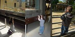 110422 mzAH 170426 © Théthi (thethi: better, back slowly) Tags: triptyque mosaïque collage enfant garçon petit grand visite tourisme zoo antwerpen anvers vlaanderen belgium belgique faves18