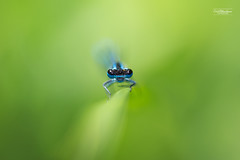 Alone (cedric.chiodini) Tags: macro insecte ef100mmf28lmacroisusm canoneos1dx bokeh simple