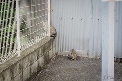 Today's Cat@2013-05-22 (masatsu) Tags: cat canon catspotting thebiggestgroupwithonlycats powershots95