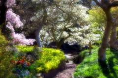 Dream a little dream with me (Heaven`s Gate (John)) Tags: trees england gardens landscape botanical spring birmingham focus soft blossom dream 10faves 25faves johndalkin heavensgatejohn