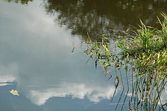 Wetlands... real and reflected (jungle mama) Tags: sky cloud reed water reflect wetland coth5 blinkagain wakodahatcheewetlandsdelraybeachfl