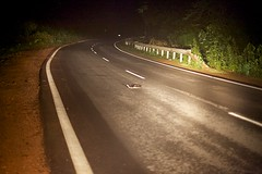 Snake on the road between Madikeri and Mangalore