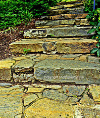 Up the Stone Steps (Photographybyjw) Tags: park green up stone rural this rocks shadows hand shot cut north steps foliage made carolina built pleasant photographybyjw