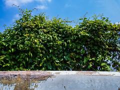 PhoTones Works #3193 (TAKUMA KIMURA) Tags: sky cloud plant nature leaves landscape boat leaf scenery prairie      kimura     takuma   ep5  photones