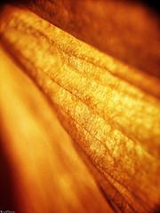 All Aglow. (RichTatum) Tags: macro texture lamp paper warm bright rich lampshade iphone tatum blogrodent richtatum iphoneography fergusoptical