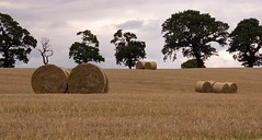 Autumn is on the way! (Deborah S-C) Tags: trees field countryside harvest straw