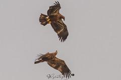 rators woodlawn 9-23-12 -9765