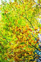 IMG_1135 (moutoons) Tags: fruit jaune automne rouge eau couleurs rivière pont porte nuage gorges tarn marron cascade arbre château champignon brume verte pomme croix feuille poire légume quézac lozère cévennes coing ispagnac