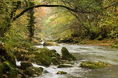 Inspiration impressioniste (Tonton Dave) Tags: water forest river landscape switzerland eau suisse rivière orbe paysage forêt vaud lesclées