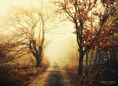 autumn reverie / szi mereng (heizer.ildi) Tags: road autumn trees mist nature leaves fog forest