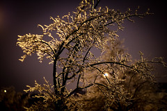 Icy Trees and branches after the ice storm in Toronto Dec 2013 (Stephen G Woo Photo journey) Tags: auto camera leica trees snow toronto ontario canada storm cold tree ice rain night lens photography 50mm 1 evening photo branch fuji photographer g branches voigtlander hill steve freezing 11 x photographic woo richmond stephen m mount photograph m42 pro fujifilm icy pentacon f18 f11 nokton multi coating  gurie stephenwoo  xpro1 stephengwoo sgwoo