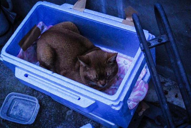 Today's Cat@2013-12-24