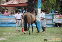 DSC_0067 (AgendaGauchaJujuy) Tags: argentina caballos palenque jinete gauchos jaramillo jujuy tilcara gaucho jineteada tropilla cachullani chucarodeldurazno quebaradehumahuaca