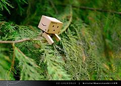 danbo_113 (iskandarbaik) Tags: park uk autumn trees england tree cute home forest toy photography leaf woods bokeh outdoor manga cardboard autumnal yotsuba danbo danbooru revoltech danboard cardbo danboru vision:plant=073 vision:outdoor=0969