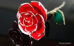 ♥ Rose of my Heart ♥ (AreKev) Tags: red rose redrose flower love zjchao forever preserved 24kgoldplated 24k goldplated valentines day valentinesday valentinesday2017 macro sonycybershot sony cybershot sonydscrx100 dscrx100