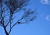 Bird (linda.addis) Tags: flickrlounge weeklytheme creativecomposition