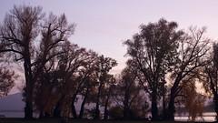 Abendstimmung (g e g e n l i c h t) Tags: chiemsee fraueninsel frauenchiemsee landschaft abend sonnenuntergang violettestunde blauestunde stimmung see bäume herbst oktober lumixgx7 mft leicaelmaritr2828mm vintageprimelens
