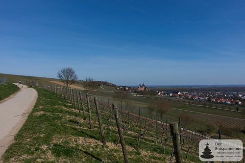 In den Weinbergen über der Staatlichen Weinbaudomäne Oppenheim