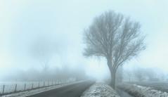 The Silence of the Solemn Tree. (Alex-de-Haas) Tags: smorgens 50mm alexdehaas d5 dutch hdr holland january nederland nederlands netherlands nikkor nikkor50mm nikon nikond5 noordholland thenetherlands westfriesland clouds cold countryroad daglicht damp daylight farmfields farmlands fog foggy frost handheld haze hazy highdynamicrange hoarfrost ice icy januari koud laaghangendebewolking landscape landscapephotography landschap landschapsfotografie landweg landweggetje licht light manage mist mistig misty morning nevel nevelig ochtend overdag polder rijp stables watervapor waterdamp weg winter wolken
