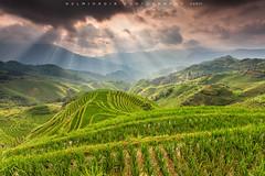 Rays above the field (©Helminadia Ranford) Tags: rays terace rice longji china guilin travel landscape nature