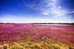 Colors of Spring (Kansas Poetry (Patrick)) Tags: clover sprin spring missouri weeds wildflowers lake patrickemerson patricklovesnancyforever