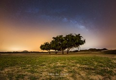 Before Sunrise (samy olabi) Tags: ifttt 500px trees sky sunrise travel night light tree grass stars dubai long exposure astronomy milky way astrophotography abu dhabi photography nightscape uae rak