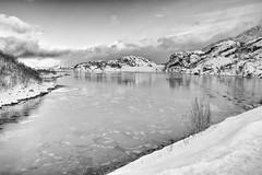 Swimming in the frozen sky (OR_U) Tags: 2017 oru norway lofoten skjørholmen årnøya bw blackandwhite blackwhite monochrome schwarzweiss landscape seascape winter snowice icefloats