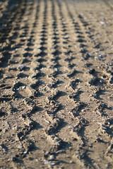 Reifenspur (shortscale) Tags: spur reifen feldweg