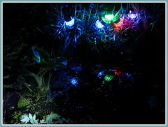 0305 b1  Solar light reflections (Andy - Busyyyyyyyyy) Tags: lll plants pond ppp reflections rrr solarlights sss water www picasaborder