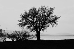 Loneliness (Micha Andrisani) Tags: micha canon eos trees bw blackandwhite matera diga