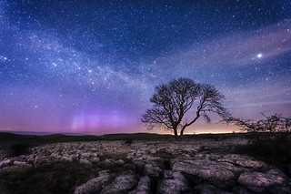 Limestone, Lonely Tree,  Milky Way & Aurora Borealis