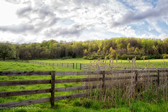 Spring Meadow (Singing Like Cicadas) Tags: 2017 april spring fence outdoors cattails cvnp akron ohio roamohio landscape ruralohio northeastohio cuyahogavalleynationalpark halefarmandvillage onethousandgifts summitcounty