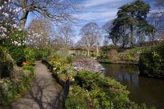 Walking in beauty (Sundornvic) Tags: spring flowers blossom blooms blooming park garden dingle shrewsbury shropshire quarry green light sun shine water trees plants nature